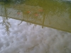 Nuestro Pequeño Humedal